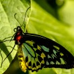 Постер, плакат: Butterfly Varieties at Botanical Gardens