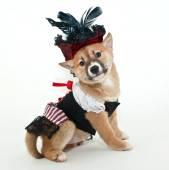 Pirát štěně
