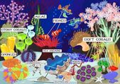 Coral reef with soft and hard corals Ecosystem