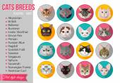 Set of flat popular breeds of cats icons Vector illustration