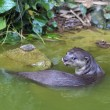 Постер, плакат: Curious River Otter
