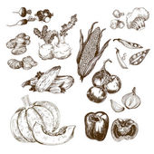 Vegetables collection Set of hand drawn graphic illustrations