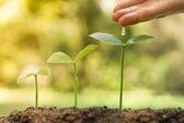 Le mani di nutrimento e annaffiare le giovani piante che crescono in sequenza di germinazione, amore e proteggere il concetto della natura