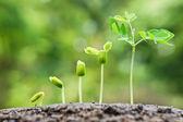 Bäume wachsen auf fruchtbaren Boden
