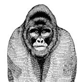 Ručně tažené vektorové ilustrace s gorila