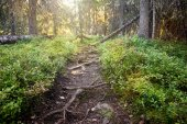 Forest trail. Republic of Karelia. Russia
