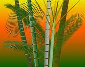 Palm trees jungle evening sky background