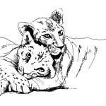 Постер, плакат: Lioness with cub