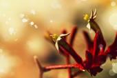 Červené květy fuzzy