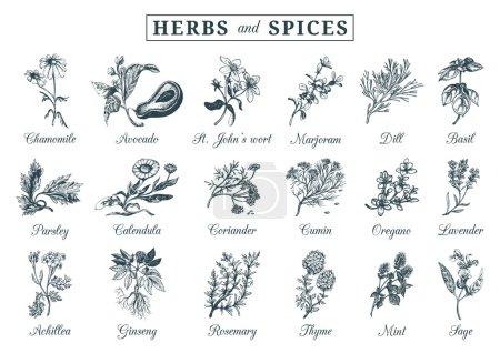 Постер, плакат: Herbs and spices set, холст на подрамнике