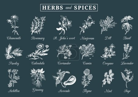 Постер, плакат: Herbs and spices set, холст на подрамнике