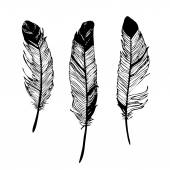 Birds feathers black and white graphic drawing vector illustration
