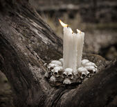 Candles on the old tree in the dark forest