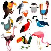 Sada různých volně žijících ptáků