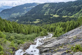 Fast mountain riveramong green alpine forest