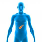 The pancreas  is a glandular organ in the digestive system and endocrine system of vertebrates.