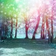 Постер, плакат: Magical Spiritual Woodland Energy Background