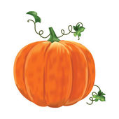 Pumpkin with leaves on a white background Vector illustration