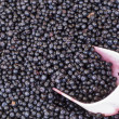 Постер, плакат: Scoop that collects blueberries