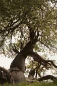 Picturesque baobab tree