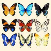 Accumulazione di vettore delle farfalle dettagliate alte realistiche