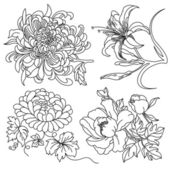 Different kinds of flowers in sketch style