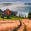 Постер, плакат: Foggy Carpathian mountains