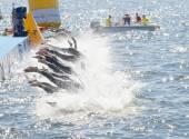 A nő versenytársak ugrik a vízbe