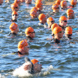 Постер, плакат: Close up of group of male swimmers wearing orange bathing caps