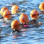 Постер, плакат: Group of triathletes wearing orange bathing caps in the water