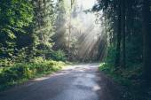 Forest road with sun rays in the morning. Retro grainy film look