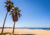 Pálmafák találhatók a venice beach