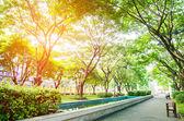 Pohled ze zeleného parku ve městě