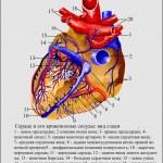 ������, ������: Heart