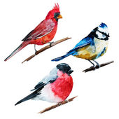 Beautiful vector image with nice watercolor birds
