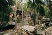 Mountain coniferous forest