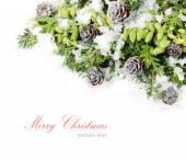 Zweige von einem Weihnachtsbaum und andere Nadelbäume mit grünen Zapfen und Zapfen auf weißem Hintergrund. Weihnachten Hintergrund mit einem Platz für den text