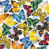 Butterfly background. watercolor drawing
