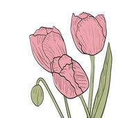 Sketch of tulips isolated on white background
