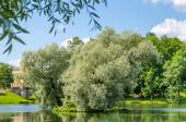 A small island with silvery willows in the midst of a beautiful lake against the blue sky and the Gatchina Palace near Saint Petersburg.