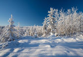 Winter forest with deep snow on frosty sunny day