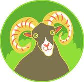 Wild Ram Animal