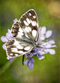 Vintage motýl na květu