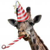 Funny giraffe party animal with a red and white striped birthday hat and noisemaker horn. The giraffe is making a silly face.