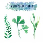 Set with watercolor plants