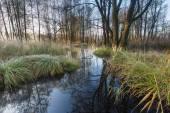 Morning wetlands