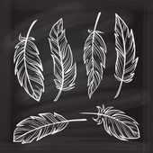 Vintage hand-drown feathers set on a chalkboard background