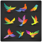 Set of colorful flying birds logo elements Rainbow silhouettes on dark