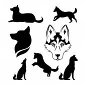 Husky icons and silhouettes Set of illustrations in different poses
