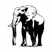 Graphic image of an elephant on a white background The freehand drawing the simple sketch The black lines in the form of a large elephant Vector illustration